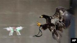 老鷹對付無人機