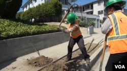 Los Angeles Conservation Corps members plant trees and maintain green spaces in the city. (M. O'Sullivan/VOA)