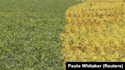 Primavera en el este de Brasil, feb 7, 2013. REUTERS/Paulo Whitaker