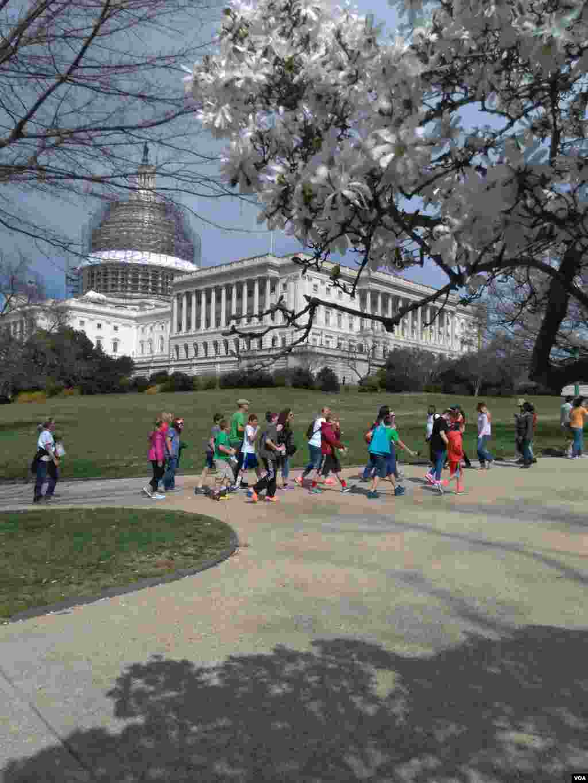 آب و هوای واشنگتن به گونه ای است که در آستانه بهار و سال نو، کم کم شکوفه ها جوانه می زنند و حسابی حال و هوا بهاری می شود.