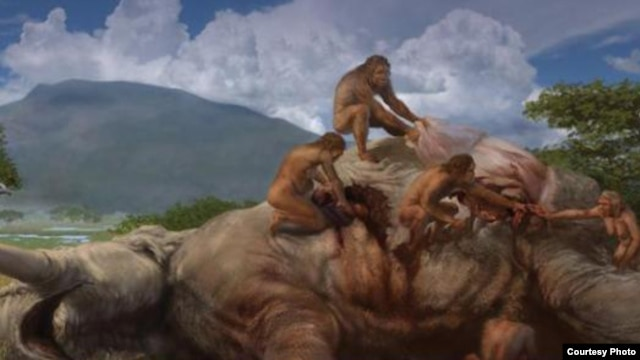 An artistic rendering of homo erectus killing an elephant on the African savannah about 1.2 million years ago. The adaptability of the human brain has enabled humans to survive and thrive in changing climates. (Smithsonian/Karen Carr Studios)
