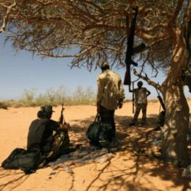 Libyan rebels rest in the shade of a tree as they gather in the al-Noflea area, near Muammar Gaddafi's hometown of Sirte, August 29, 2011