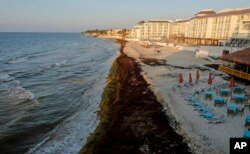 Mexico Seaweed Invasion