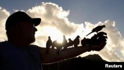 La malaria aviar, la pérdida de hábitats nativos, los huracanes y los depredadores no nativos han devastado la población de aves autóctonas de Hawái.