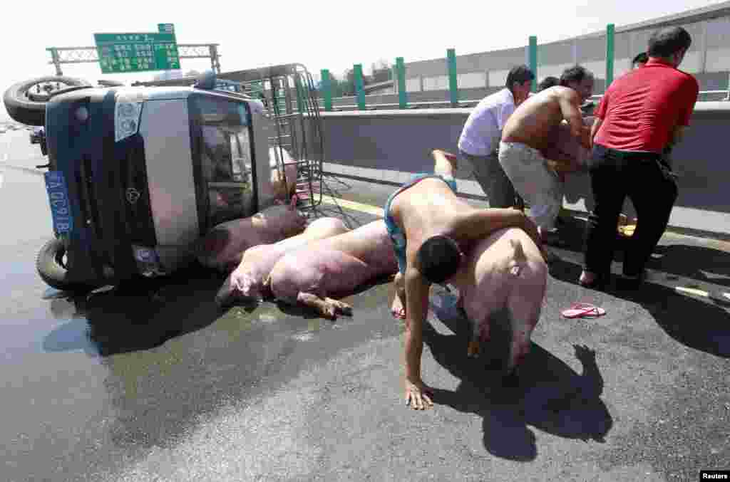 People try to stop pigs from running away next to a van which overturned while carrying 12 pigs on a highway in Fuzhou, Fujian province, China. One of the pigs died from the heat after the accident as temperature in Fuzhou reached 40 degrees Celsius (104 degrees Fahrenheit), according to local media.