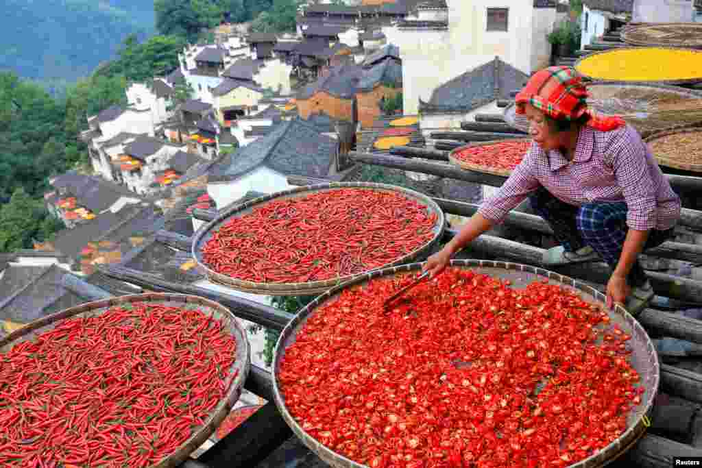 A woman dries chili peppers in the sun at a village in Wuyuan County, Jiangxi province, China.