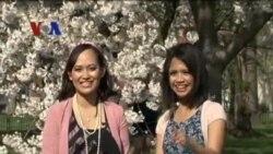 Festival Bunga Sakura 2013 (2) - Dunia Kita