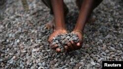 Seorang petani Nigeria memamerkan biji kakao yang sedang dijemur di sebuah pelataran di desa Iragbiji, barat daya Nigeria (Foto: dok).