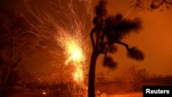 Percikan api dari pohon yang terbakar ditiup angin saat kebakaran hutan Bobcat Fire di Juniper Hills, California, 19 September 2020.