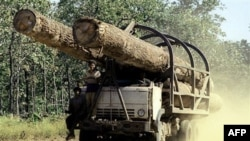 Quân đội Việt Nam bị tố cáo nhúng tay vào nạn khai thác gỗ lậu ở Lào
