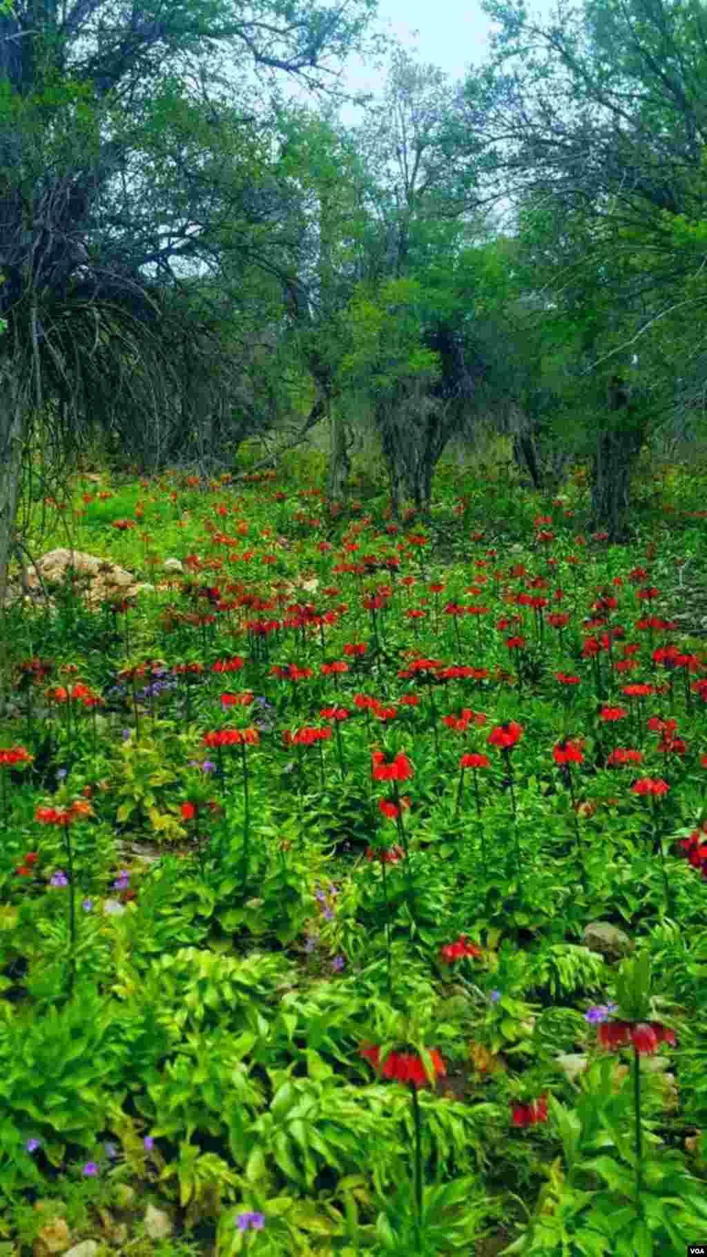 طبیعت بهاری شهرستان چرام منطقه طسوج- کهگیلویه و بویراحمد عکس: مهدی (ارسالی شما)