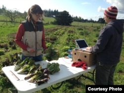 Vegetable trial evaluators at work at a Washington State University Extension experimental farm on Marrowstone Island, Washington. (Photo: Courtesy of Micaela Colley, Organic Seed Alliance)