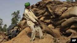 A laborer pulls at a sack of rotting wheat grain to try to salvage any that was still edible, at an open storage area in Khamanon village, some 215 kilometers (133 miles) from Amritsar, India.