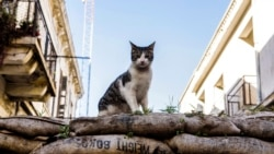 Quiz - Science Shows Early Spread of Cats in the World