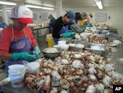 Les travailleurs du secteur des fruits de mer ont moins de travail et gagnent moins du fait de la marée noire