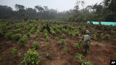 Colombia captura a uno de los líderes de Clan del Golfo