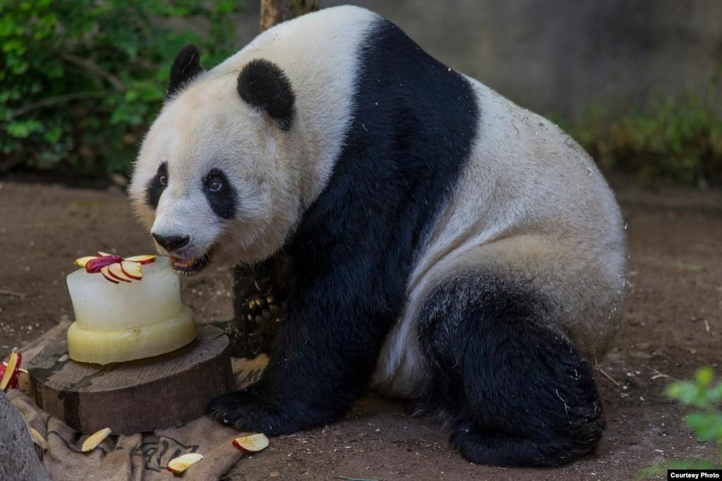 Giant Panda Birthday Cake