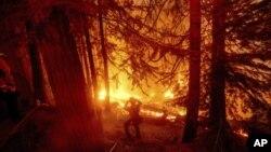 Vagtrogasci pokušavaju da ugase požar u zajednici Shaver Lake u Californiji, 7. septembar 2020.(Foto: AP/Noah Berger)