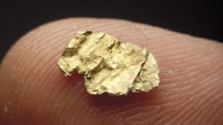California Gold Rush Pulls Americans West