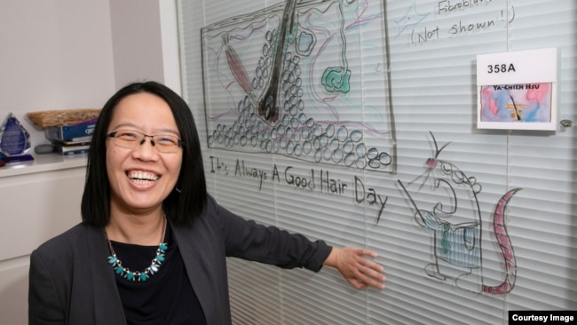 Professor Ya-Chieh Hsu, senior author of the study, shows off a diagram of a hair follicle - complete with a helpful test mouse. Ya-Chieh Hsu has received the Rosslyn-Abramson award for teaching. (Jon Chase/Harvard Staff Photographer)