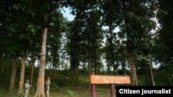 Home of Teak, Burma Forest (Photo credit U Maung Maung Soe)