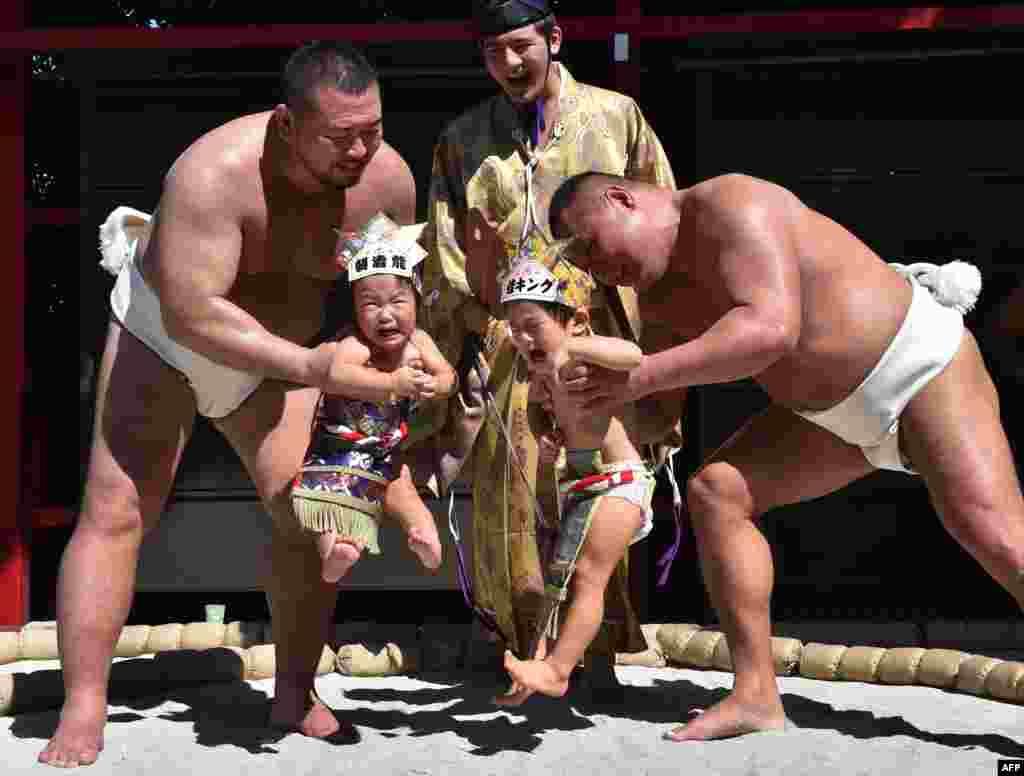 """Pegulat Sumo menggendong bayi dalam acara """"Baby-cry Sumo"""" di Kuil Irugi di Tokyo. Orang tua Jepang yakin bahwa pegulat sumo bisa membantu bayi-bayi menangis, sebagai harapan bayi tersebut bisa tumbuh dengan sehat."""