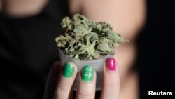 La discusión sobre la legalización de la marihuana ha cobrado fuerza en los últimos meses en EE.UU.