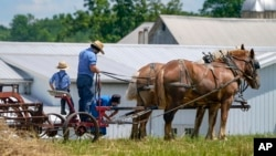 FILE - People in Amish country prepare a horse team to work on a farm in Pulaski, Pa., Wednesday, June 23, 2021. The vaccination drive is lagging far behind in many Amish communities. (AP Photo/Keith Srakocic)