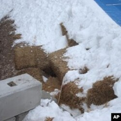 The haybale 'potholes' at Cypress Mountain show why spectator standing room tickets were cancelled, 15 Feb. 2010