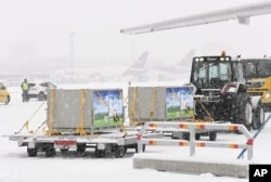 Giant pandas, male Hua Bao (in Finnish Pyry) and female Jin Bao Bao (in Finnish Lumi), arrive to Helsinki-Vantaa airport in Vantaa, Finland on Thursday January 18, 2018.