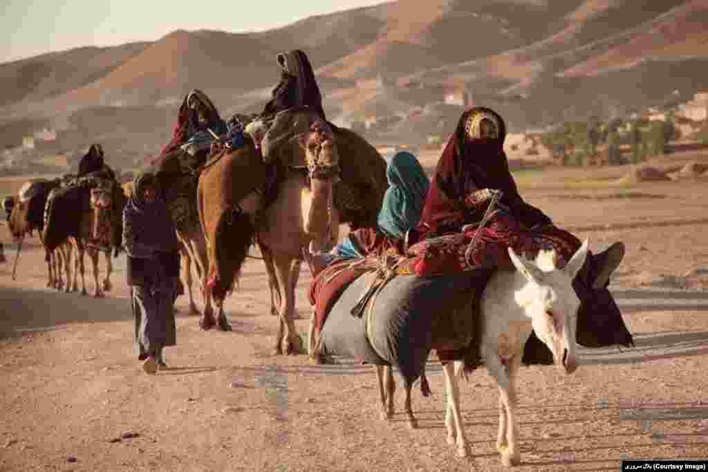 کوچی های افغانستان با فرارسیدن بهار مناطق گرمسیر را به سمت مناطق نسبتاً سردسیر ترک می گویند