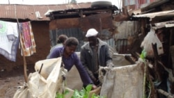 Urban farmers growing vegetables in a slum of Nairobi, Kenya.