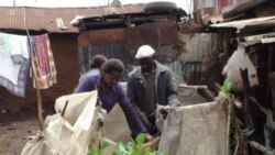 Urban farmers growing vegetables in a slum of Nairobi, Kenya.