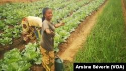 Une agricultrice satisfaite de sa récolte à Mindouli, au Congo-Brazzaville, le 16 septembre 2019. (VOA/Arsène Séverin)