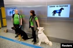 فن لینڈ کے ایئرپورٹ پر کرونا وائرس کی شناخت کرنے والے سدھایے ہوئے کتے تعینات کیے گئے ہیں۔