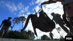 Un elefante es levantado con una grúa en Lilongwe, Malawi, en el primer paso de una migración asistida de 500 animales de la amenazada especie.