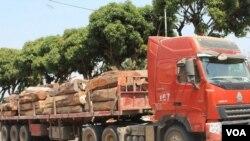 Operador diz que proibição de abate de madeira não é claro -0:56