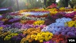 Vườn thơ