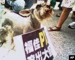 大连都市居民带上家中宠物上街抗议化工项目