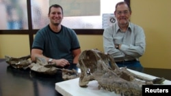 Dr. Ruben Martinez (R), from the Universidad Nacional de la Patagonia San Juan Bosco, and Dr. Matt Lamanna from the Carnegie Museum of Natural History, pose with the skull and neck bones of the new titanosaurian dinosaur species Sarmientosaurus musacchioi in this undated picture. (Courtesy: Matt Lamanna)