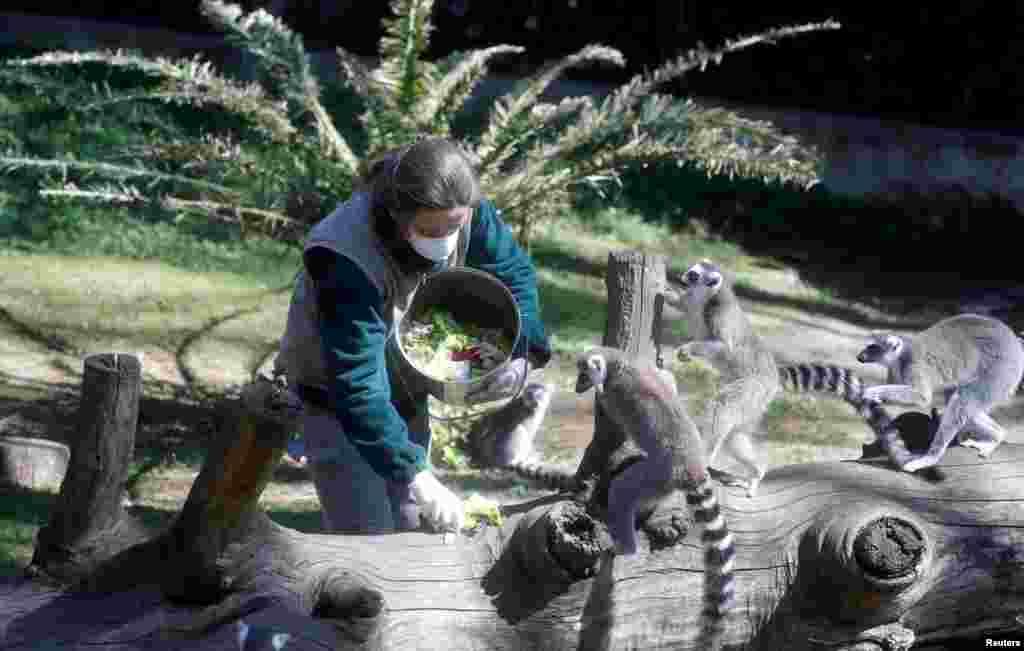 روم کا چڑیا گھر عوام کے لیے بند ہے لیکن عملے کے ارکان جانوروں کی دیکھ بھال اور انہیں کھانا دینے کے لیے چڑیا گھر میں موجود ہیں۔