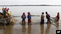 Cambodian fishermen move their fishing net from the Mekong River as they catch fish at the out skirt of Phnom Penh, Cambodia, April 19, 2011