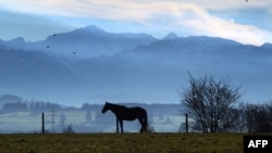 A horse stands on a paddock with the Alps in the background near Apfeltrang, southern Germany, Nov. 23, 2014.