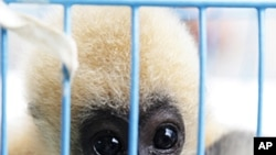 China Joins Regional Network to Fight Animal Trafficking