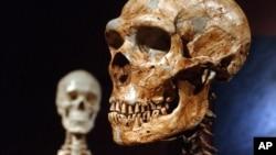 La extinción no ocurrió de golpe en todas las regiones de Europa, sino que se produjo de forma progresiva durante milenios.
