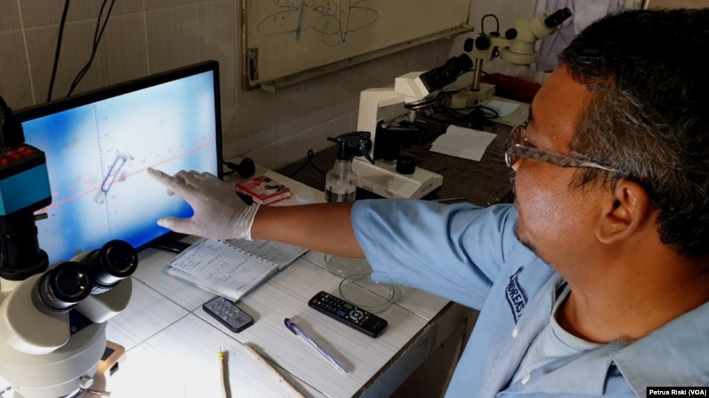 Bentuk dan ukuran mikroplastik dilihat dibawah mikroskop (Foto:VOA/ Petrus Riski).