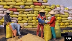 FILE - This picture taken on March 2, 2016 shows farmers putting dry paddy into bags for sale in Vi Thuy, in the southern Mekong delta province of Hau Giang.