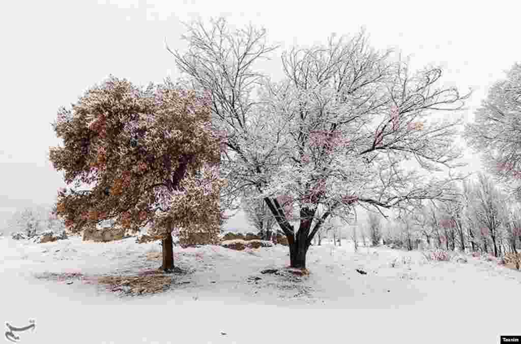 طبیعت زمستانی ارومیه عکس: مجتبی اسماعیل زاده
