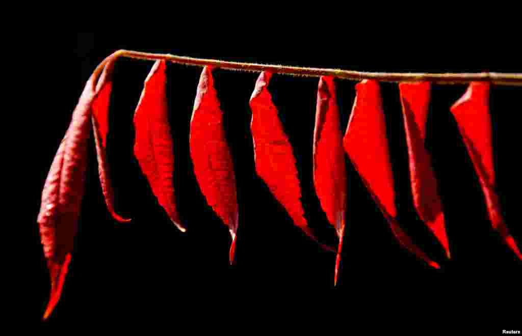 سرخ رنگ کی کشش