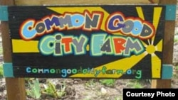 Common Good City Farm provides fresh food and farming classes to a community in Washington, D.C.